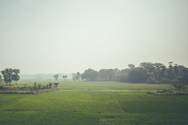 A green green world. Bangladesh Beauty In Nature Fog Crops Farming My Year My View Field Grass Grassy Green Idyllic Landscape Nature Non-urban Scene Paddy Field Rice Fields  Rice Paddy Rural Scene Scenics Tranquil Scene Tranquility Foggy Trees Village Village Life Adapted To The City