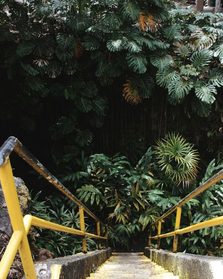 Palm Tree Tree Nature Outdoors Plant Growth Day Beauty In Nature Sky Tropical Tropical Climate Tropical Plants Hawaii Bigislandhawaii Leaves🌿 Exotic Exotic Plants Greenery Big Island Hawaii Caves Cave Adventure Stairs Staircase Stairway Live For The Story