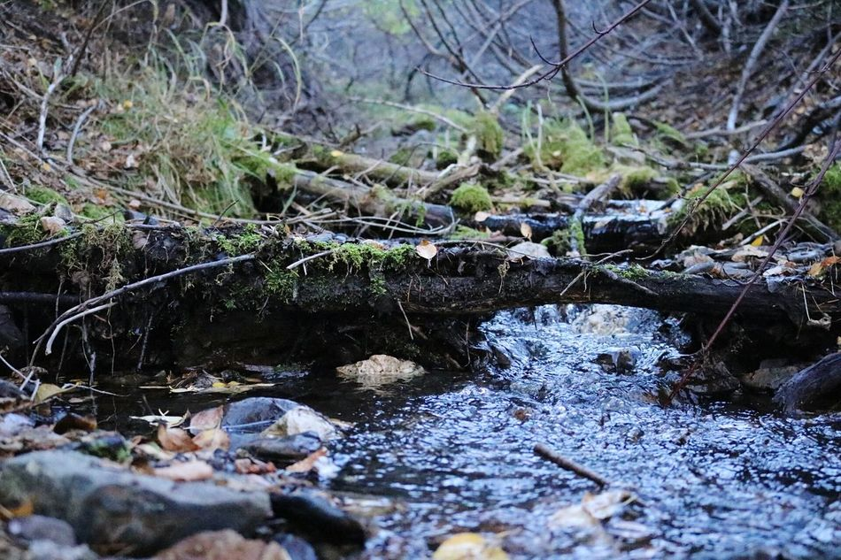Fall Hikes Riverside Canon Eos