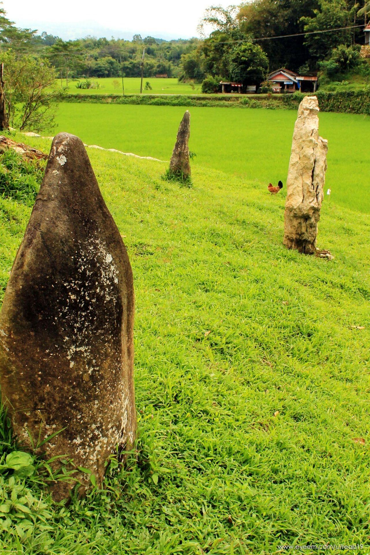 Menhir Menhirs Green Green Grass Green Hill Toraja Kete Kesu Rantepao Toraja Utara Travel Destinations Tree INDONESIA Nature Outdoors
