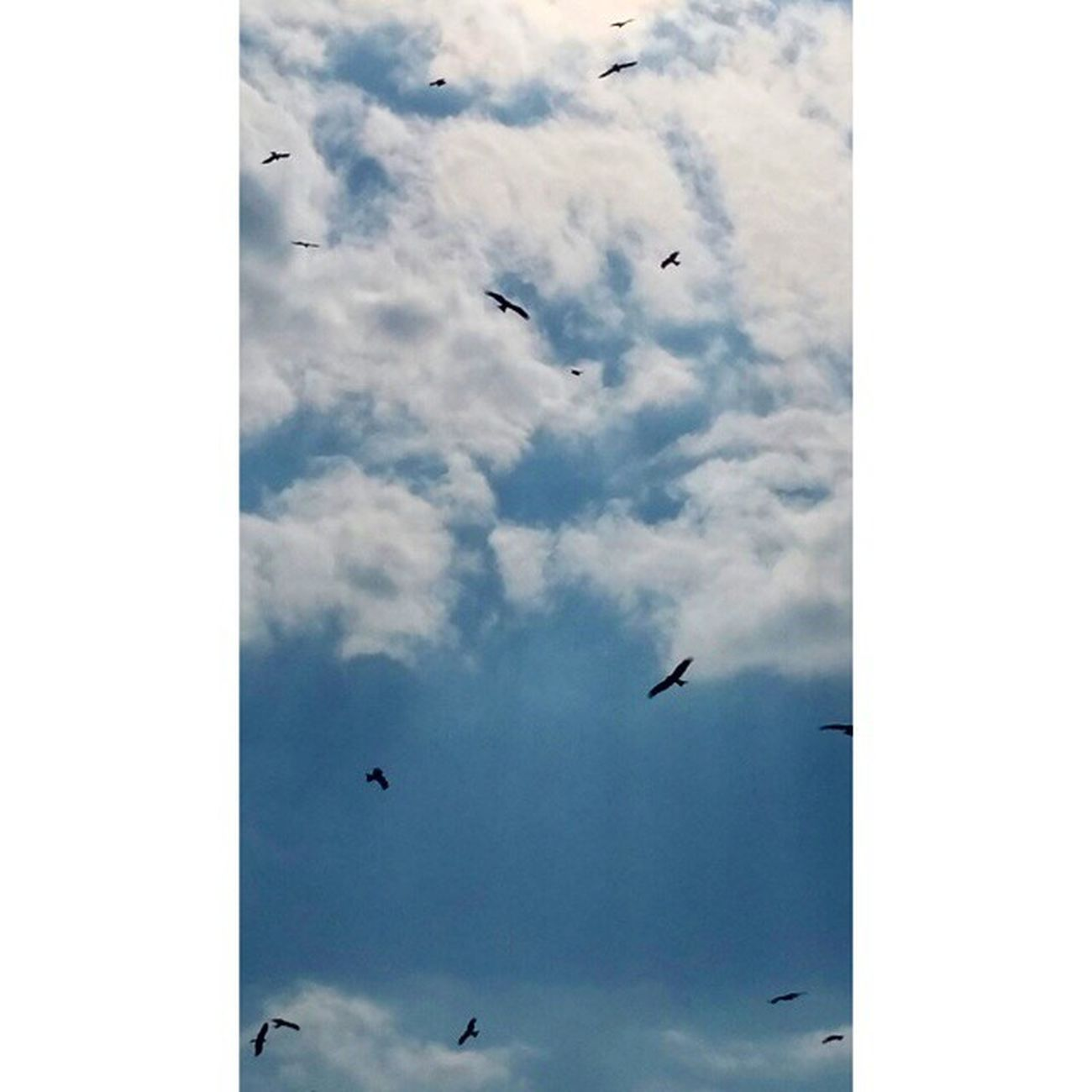 Beautiful clouds with a dash of birds! Karachi Pakistan Nature Mothernature Cloudy Clouds Blueskies Birds Eagles Scavengers Blue Sky Skyline Skylovers Skyback Beautiful Gorgeous Aimanadeel