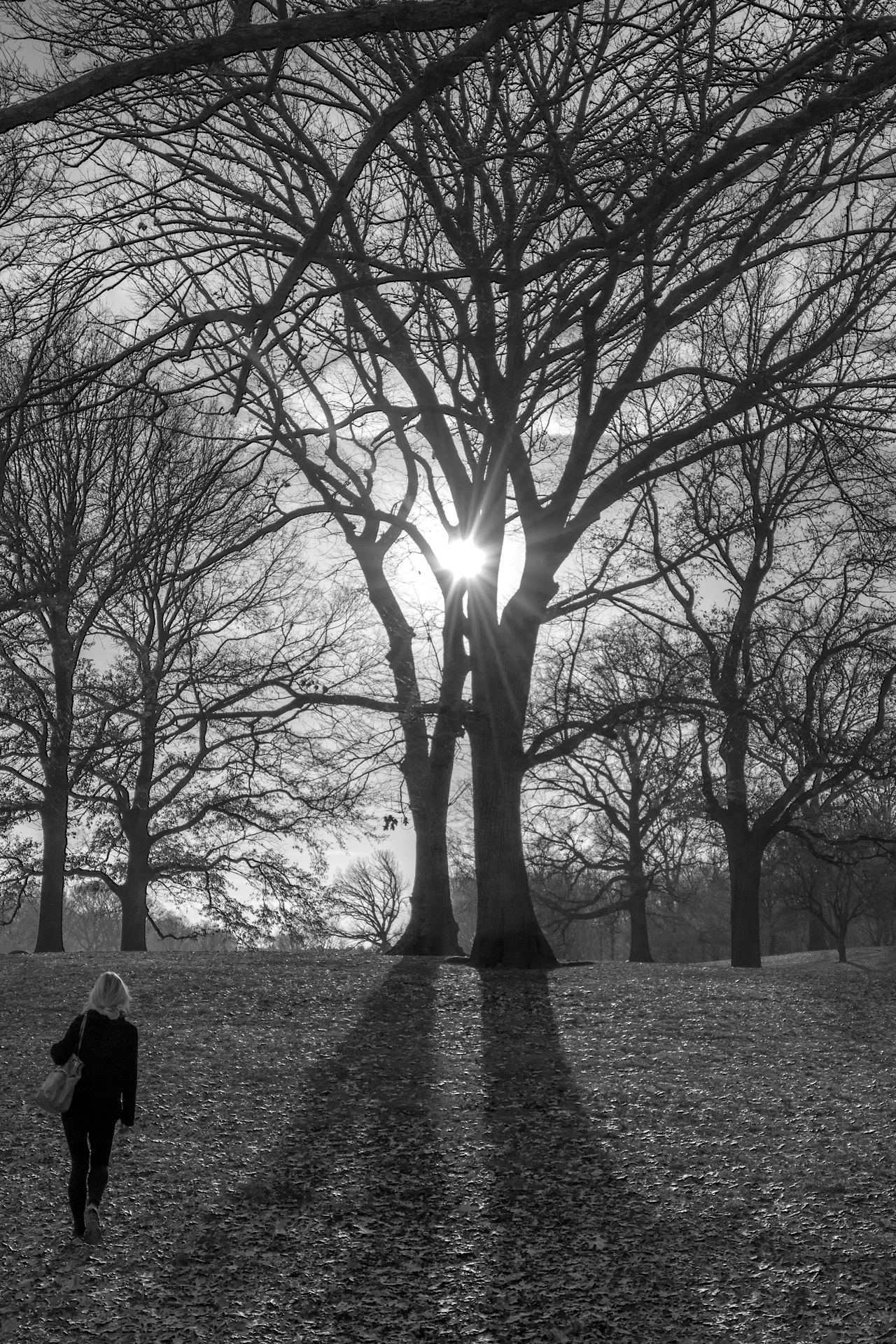 Beauty In Nature Black And White Black And White Photography Blackandwhite Branch Brooklyn Day Marchingoff Nature New York No People Outdoors Prospect Park Silhouette Sky Sun Sunbeam Sunlight Sunset Tranquil Scene Tranquility Tree