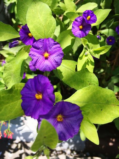 Summer Flowers Flower Gallery Colors Gallery Loving Flowers