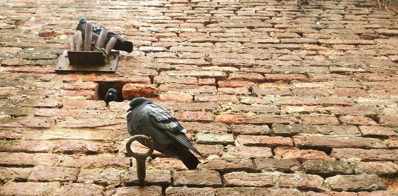 High Angle View Peasons Nest Wall - Building Feature Happy Family! ❤ Birds🐦⛅ Homelessness  TCPM EyeEmNewHere Cut And Paste Break The Mold Rural Scene Travel Art Is Everywhere Italy 🇮🇹 Siena..❤ Outdoors Building Exterior Architecture Road Mobilephotography The Street Photographer - 2017 EyeEm Awards