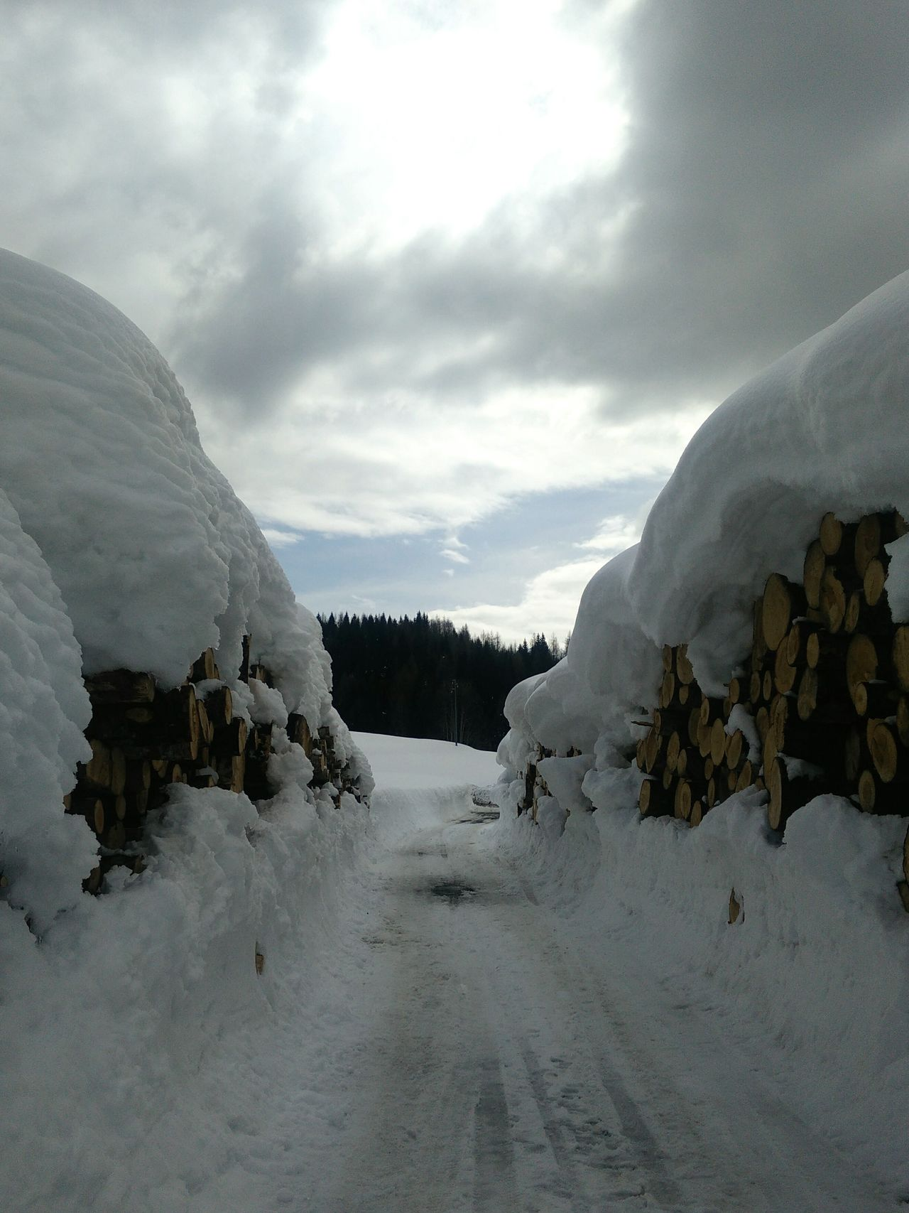 Troi ta nef (sentiero nella neve) Woods Snow ❄ Sauris