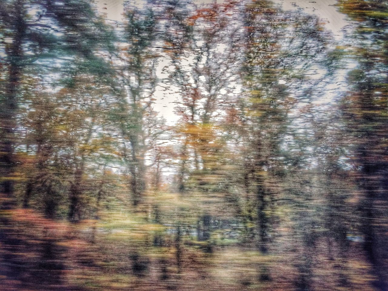 forest, nature, tree, no people, scenics, day, blurred motion, outdoors, beauty in nature, sky