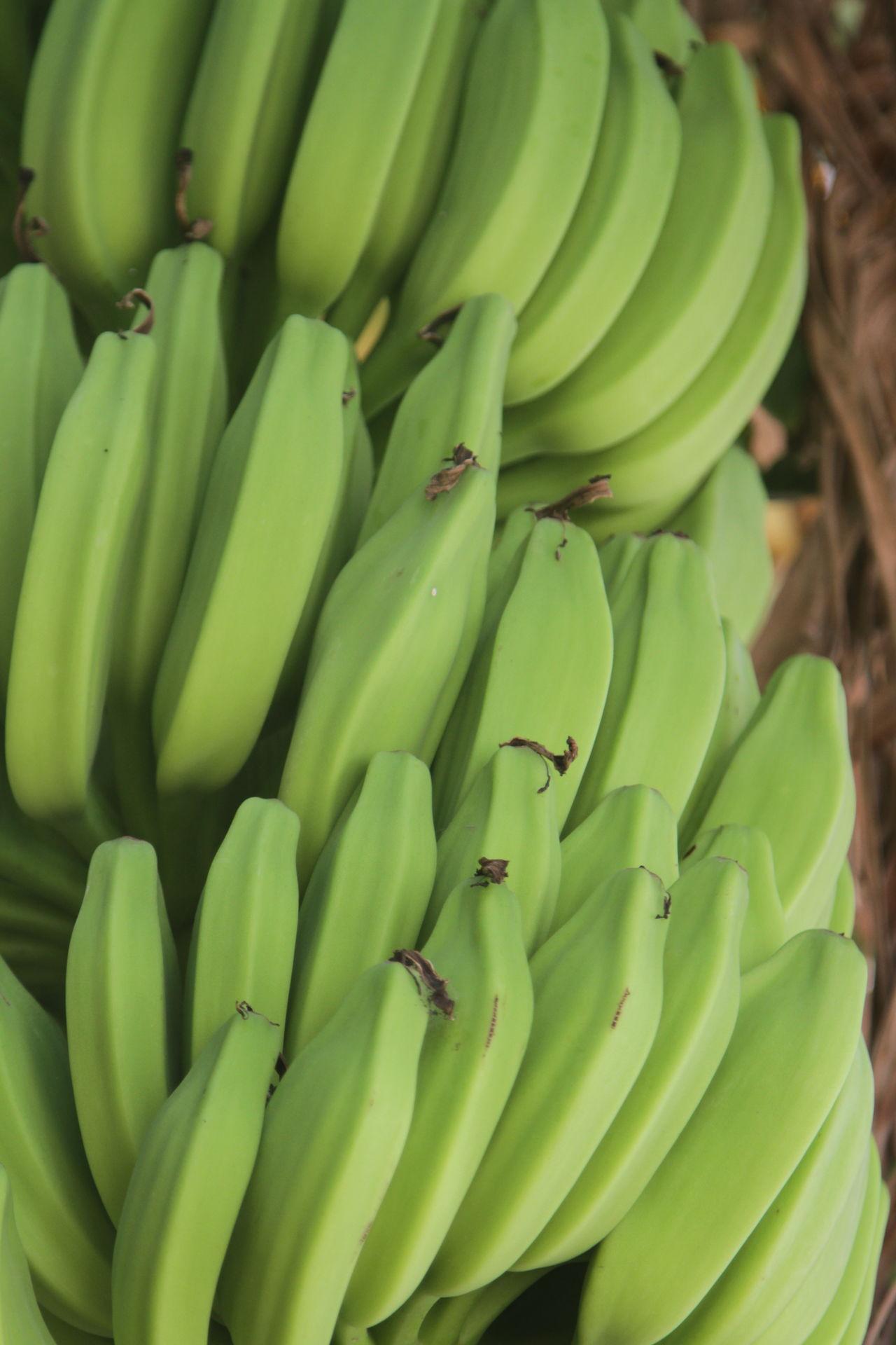 Banana Banana Tree Bananas A Dozend Food Food And Drink Freshness Fruit Green Bananas Green Color Healthy Eating No People Not Ripe Outdoors