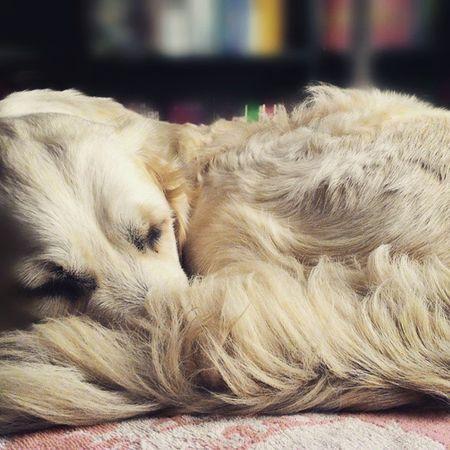 My Dog Sfondo Sfocato Faded