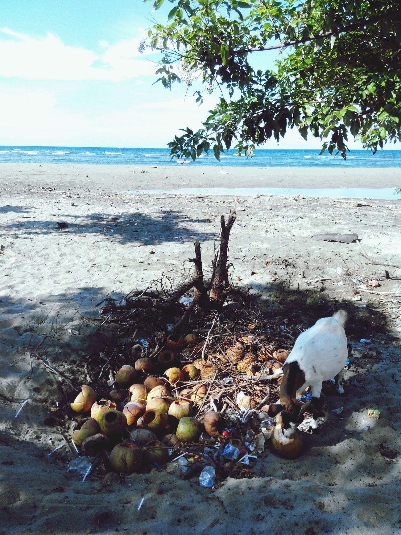 Numpang jualan di pantai punya Tuhan terus buang sampah sembarangan. Ga paham aku sama orang kita Beach Life Aceh