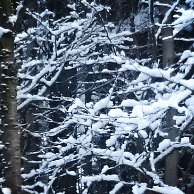 なおのしんphoto 北海道 コムカラ峠 綿帽子