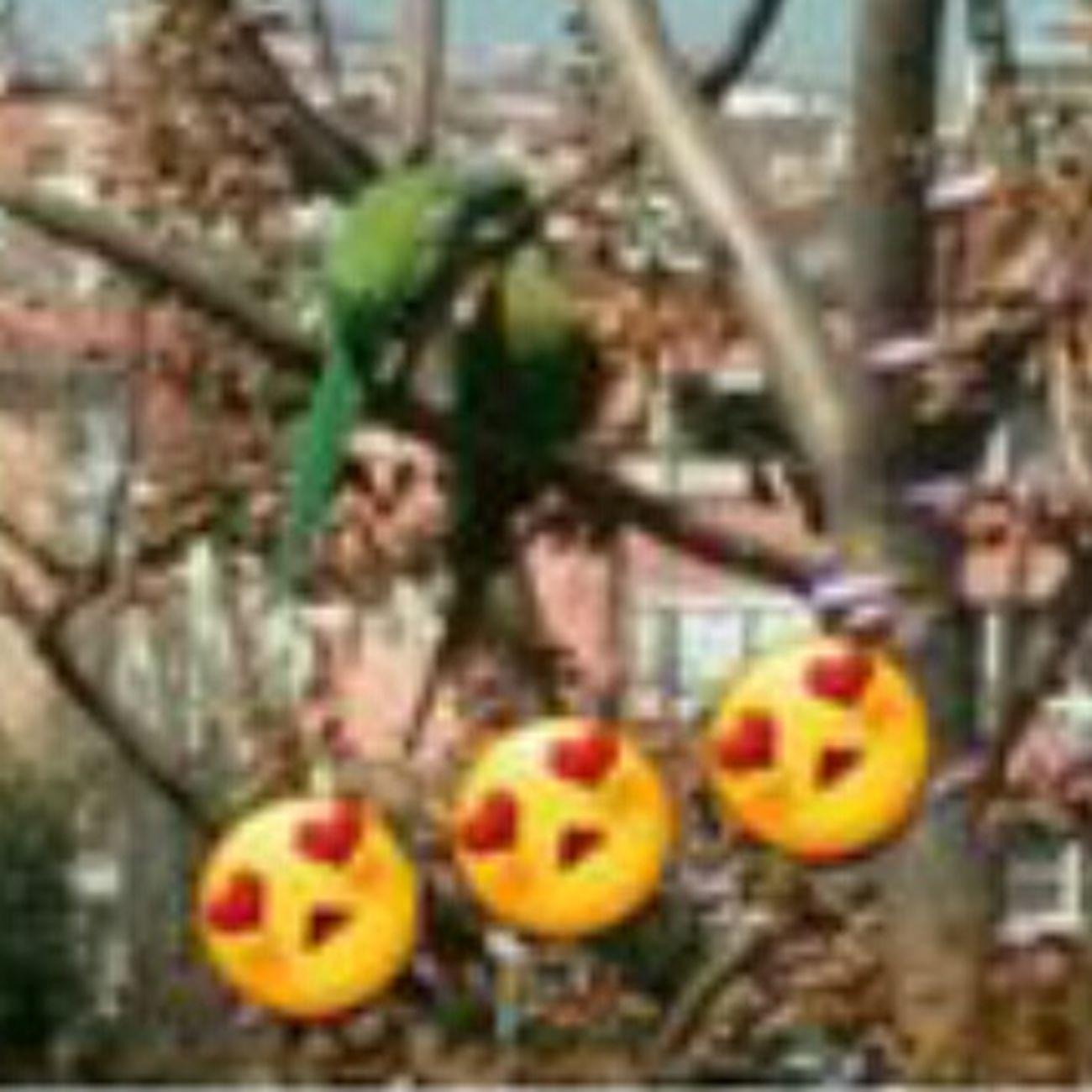 Birds🐦⛅ Bird Love Love ♥ LoveItSooooooooooMuch Lovely Coolday Turkey Goodday✌️ Doyoulikeit? Socute💕 Cute Pet Withlove❤️ Haveaniceday Justlookingforrandomhashtags