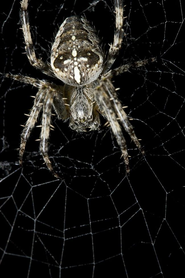 Spider Web Dark Background