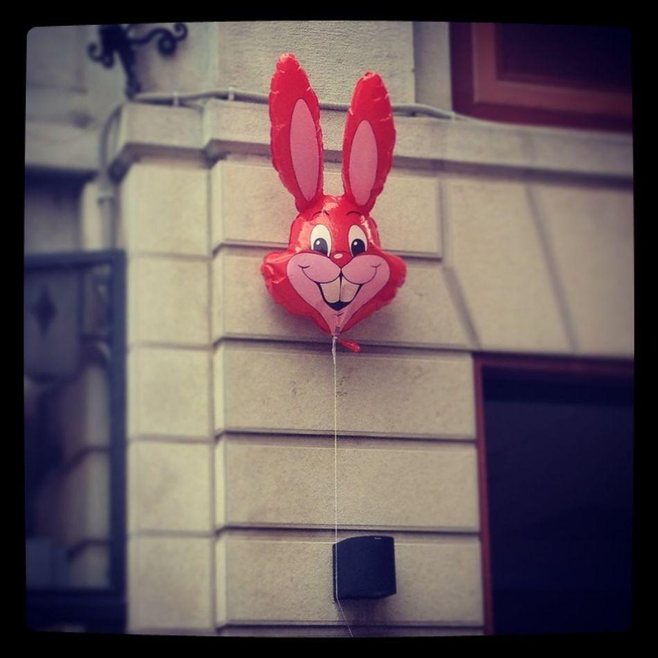 Follow The Rabbit