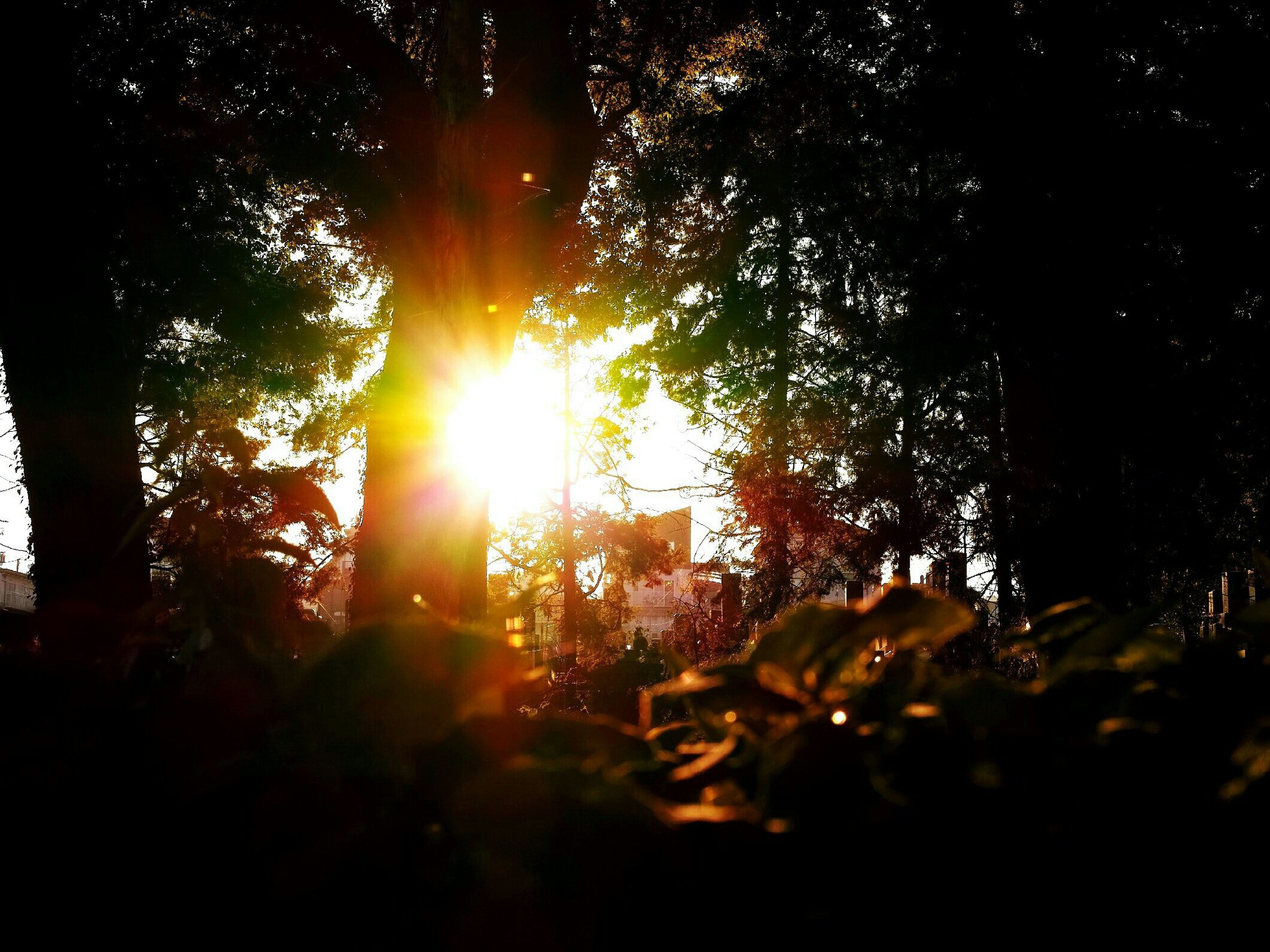 sun, tree, sunbeam, sunlight, tranquility, lens flare, forest, nature, tranquil scene, sunset, growth, beauty in nature, back lit, silhouette, scenics, field, glowing, woodland, outdoors, landscape
