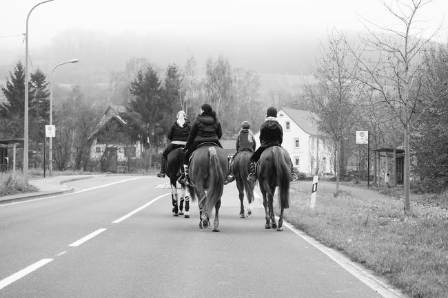 Horses and Ladies in Germany