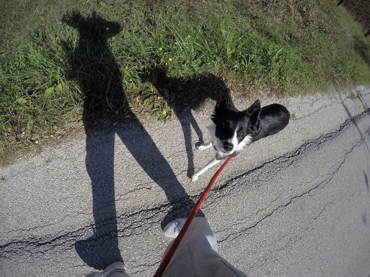 domestic animals, pets, mammal, dog, shadow, one animal, outdoors, walking, day, sunlight, real people, one person, men, nature, people