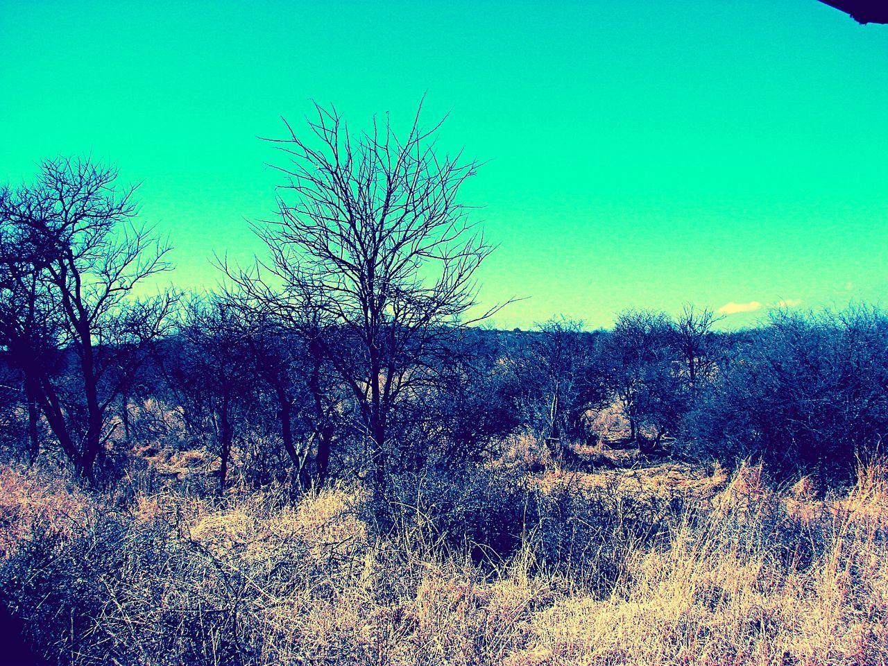 African Bush Bushveld EyeEm Nature Lover EyeEm Vision Field Growth Landscape Nature Tranquil Scene