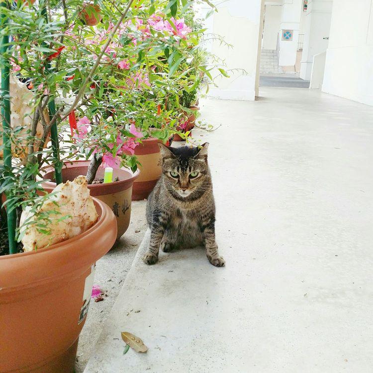 Balanced stance Cat Tabby Gato VSCO Balance Pottedplants