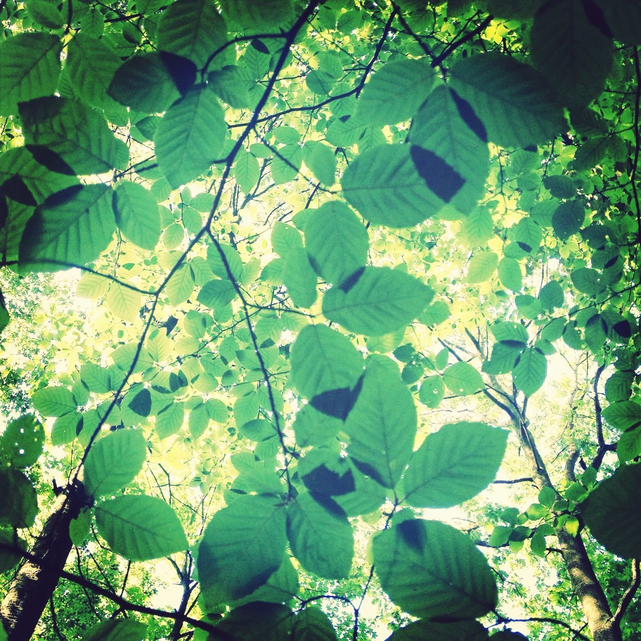 leaf, growth, green color, nature, plant, outdoors, day, tree, sunlight, beauty in nature, freshness, branch, no people, close-up