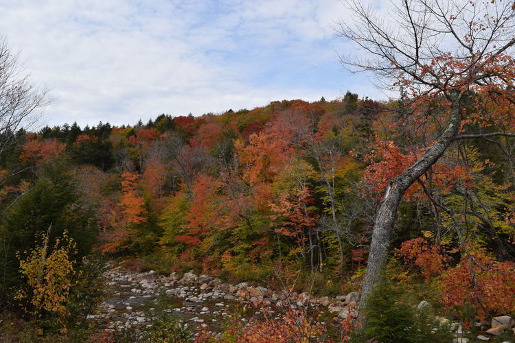 #NoFilter #Usa #autumn #colours #fall #leaves #nofiltertravel #travel #travelphotography #whitemountains