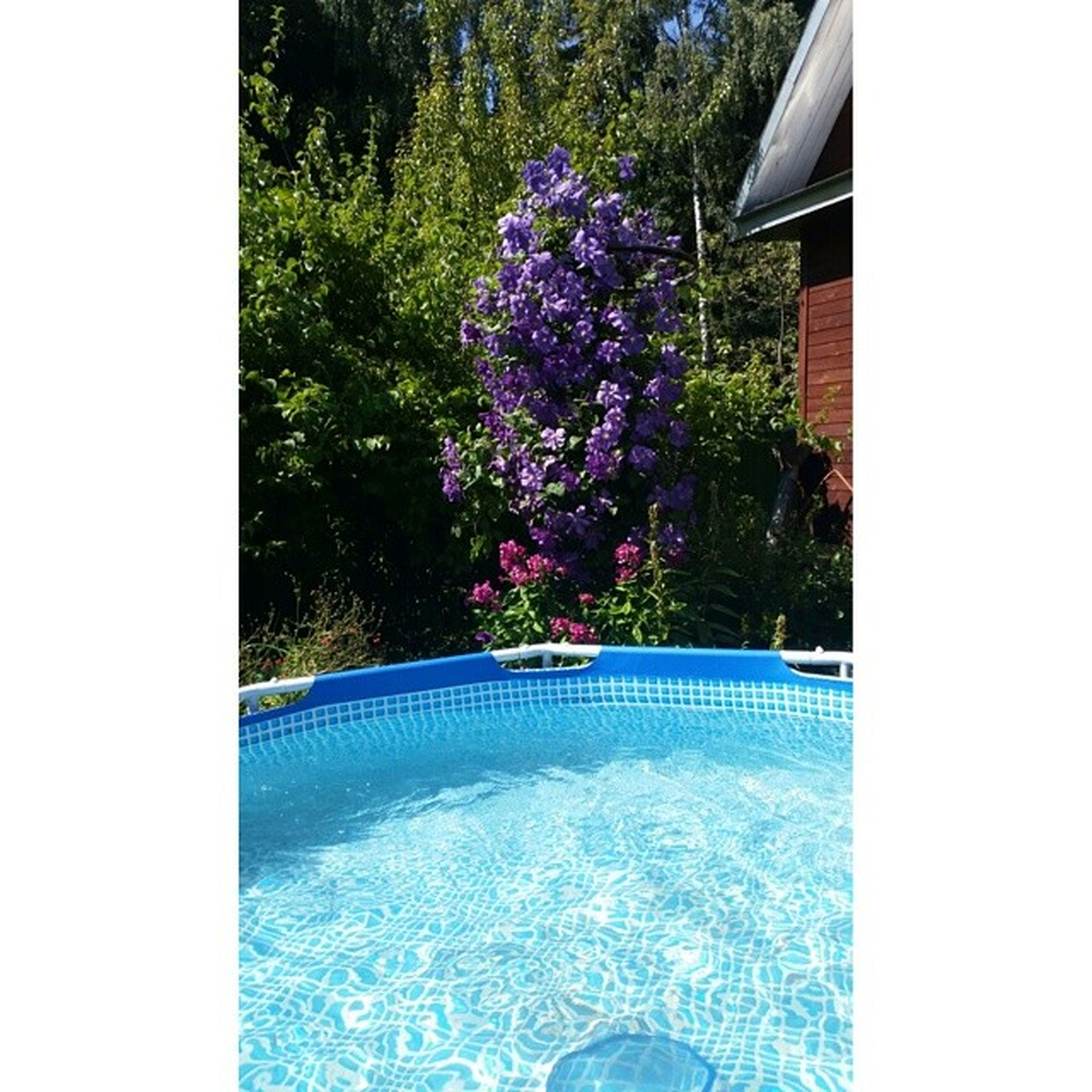 water, transfer print, auto post production filter, tree, beauty in nature, blue, growth, nature, sea, flower, plant, swimming pool, day, beach, clear sky, scenics, outdoors, tranquility, tranquil scene, sunlight