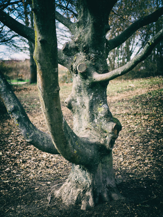 After Winter Branches Day Forms Nature Outdoors Spring Strong Structure Tree Tree Trunk Wood