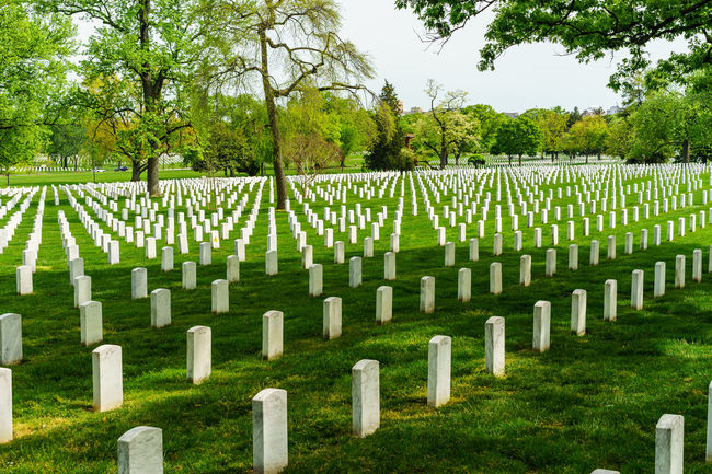 Arlington National Cemetery Day Fence Grass Graveyard Graveyard Beauty Green Color Growth In A Row Lawn Lawnmower Military Mower Nature Outdoors Paris Park - Man Made Space Side By Side Soldiers Spring Tranquil Scene Tranquility Tree Washington, D. C. Worker