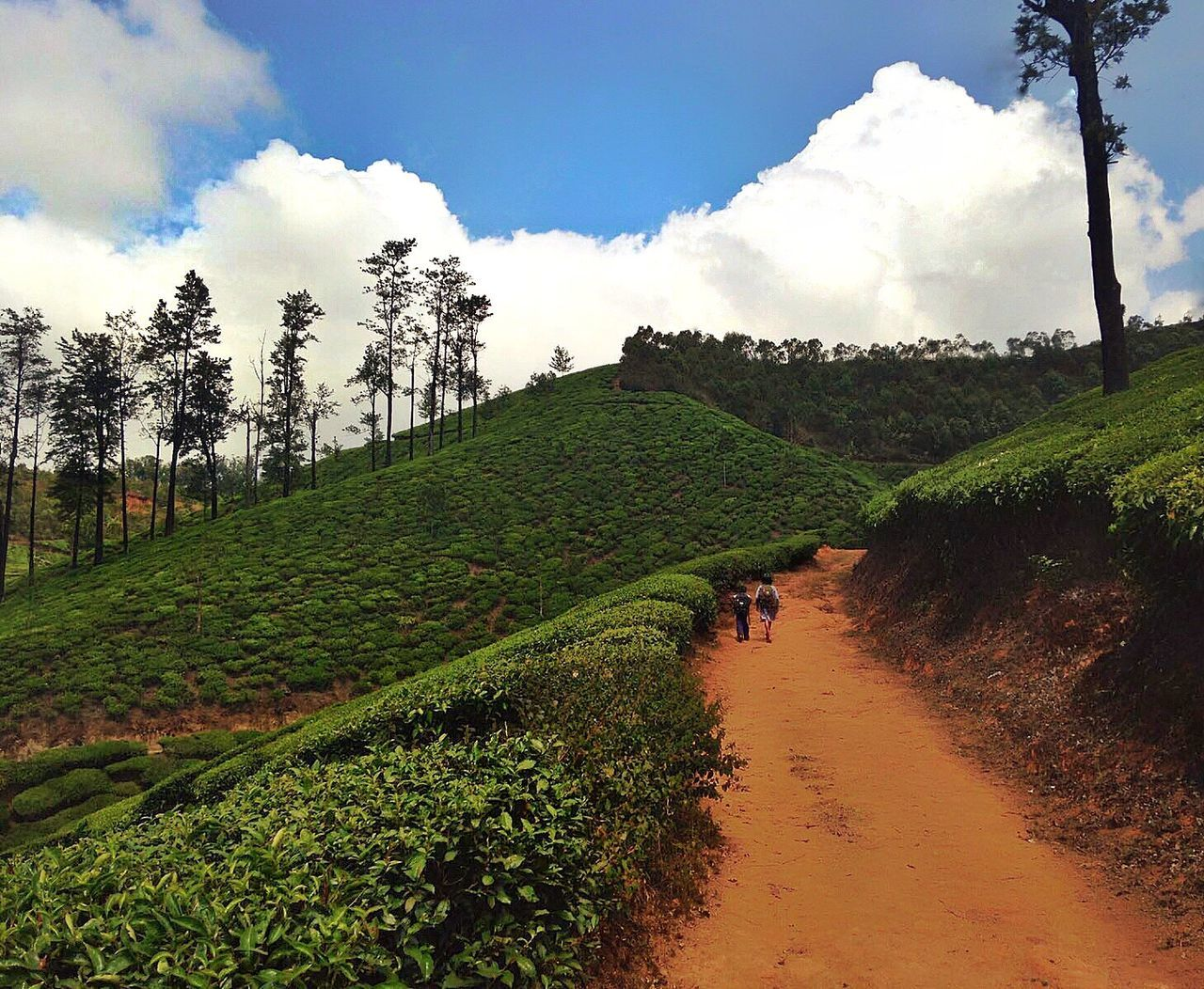 India Munnar Tee Children Road Brother And Sister Dedication School Unbeliveable Cute Love Your Life
