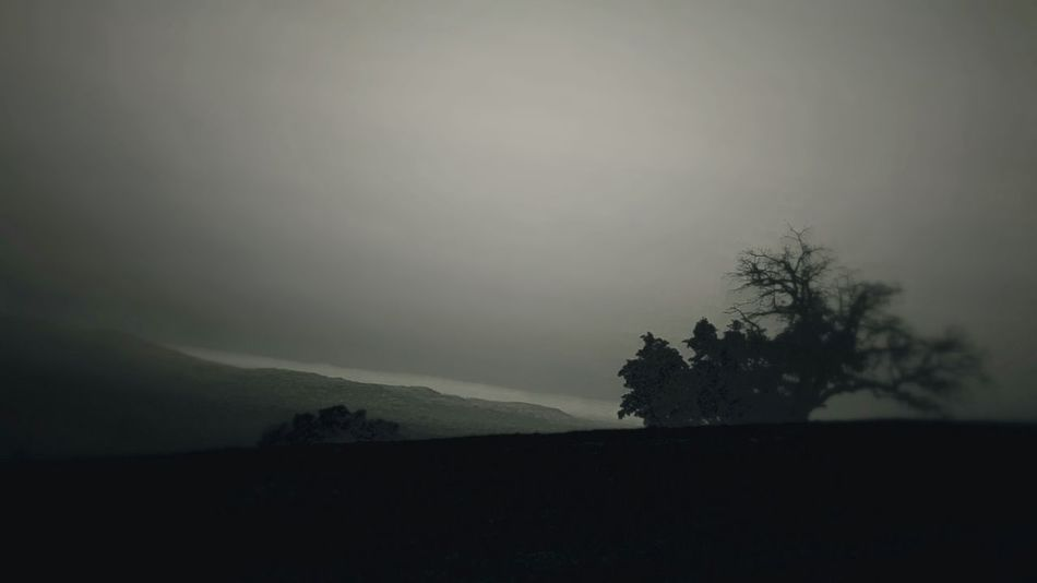 Tree Beauty In Nature Nature Landscape Fog Forest Outdoors Sky Night Tranquility Beauty Nature Tree Surreal Ethereal Atmospheric Mood Silhouette Solitude Dark Mysterious Black And White Photography Noirphoto Outline Beauty In Nature