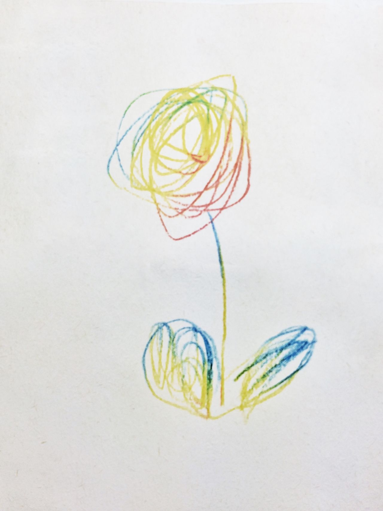 Fouryearsold Daughter Drawing Flower