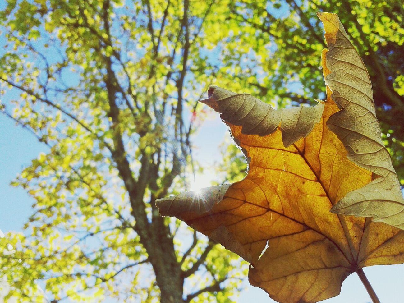 autumn is here. Autumn Color Of Autumn BeautyAndMadness