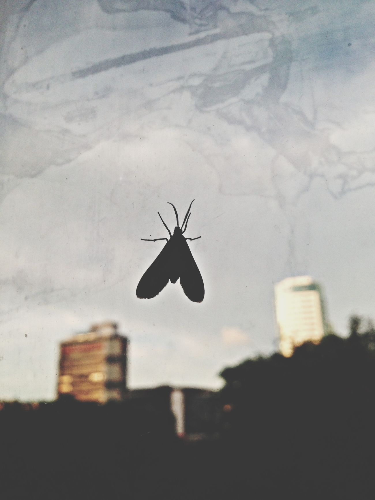 Something like a Bug at the Window . That kinda was the view Frommywindow yesterday haha