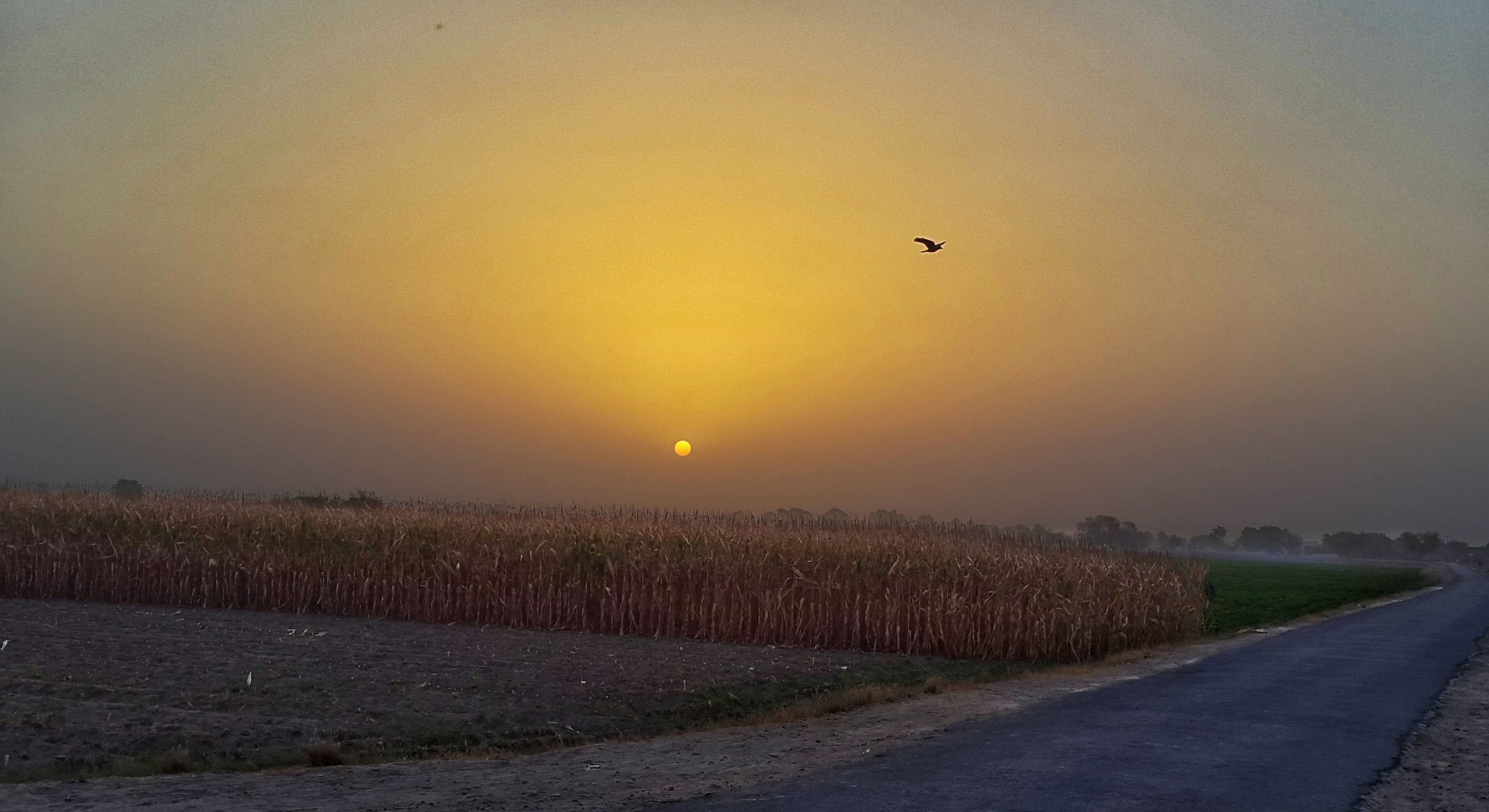 sunset, tranquil scene, sun, tranquility, scenics, landscape, beauty in nature, nature, orange color, sky, field, idyllic, copy space, road, horizon over land, flying, transportation, sunlight, outdoors, no people