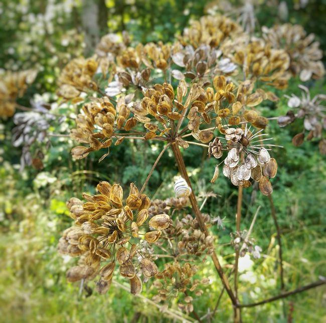 Vimy Nature France Pas De Calais Arras Flowers Escargot