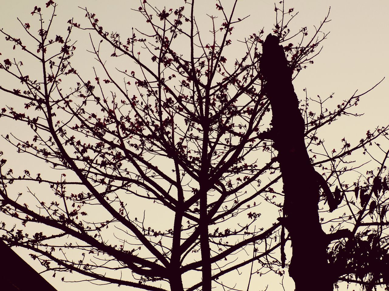 tree, branch, low angle view, nature, silhouette, outdoors, no people, sky, day, growth, tree trunk, beauty in nature, bare tree, animal themes, bird