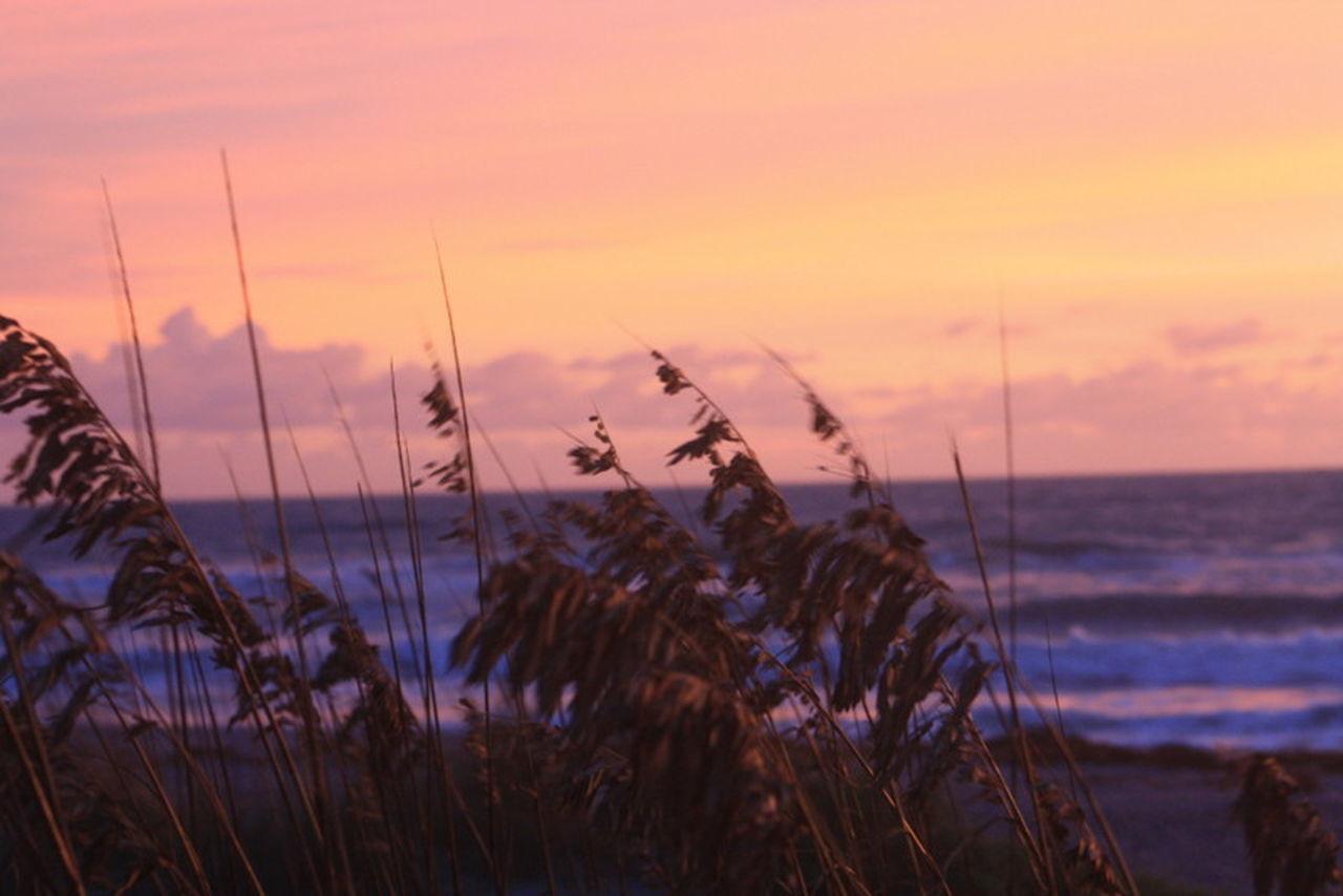 Beach, Sea Oats, Sand Dunes, Sand, Dunes, Beach Dunes, Ocean, Ocean Front, Water Front Dawn Just Hanging Out Nature Ocean View Sky Tranquil Scene Water