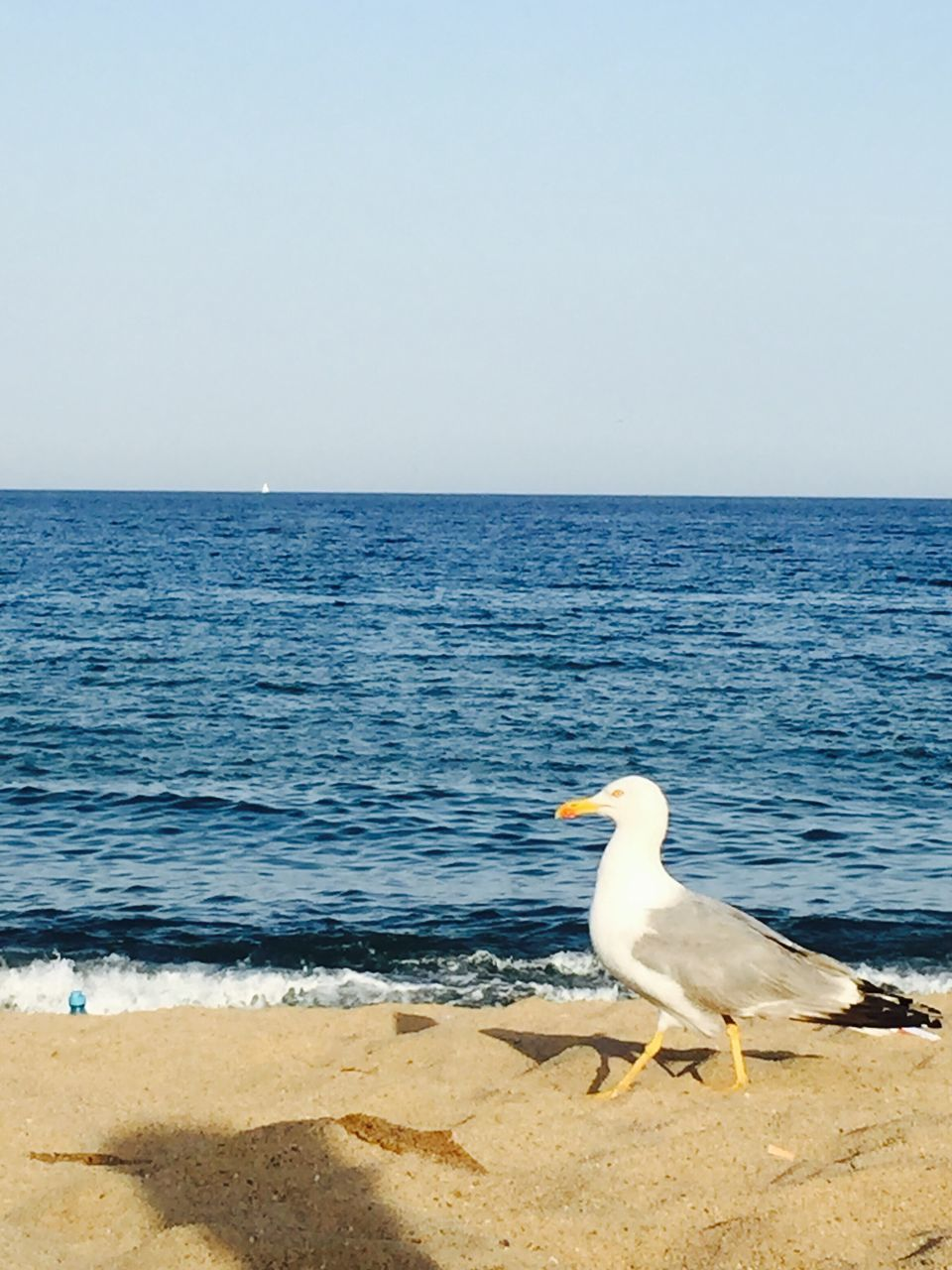 sea, horizon over water, water, nature, scenics, beach, beauty in nature, one animal, clear sky, copy space, animals in the wild, animal themes, bird, tranquil scene, seagull, outdoors, day, tranquility, no people, sand, sky, perching