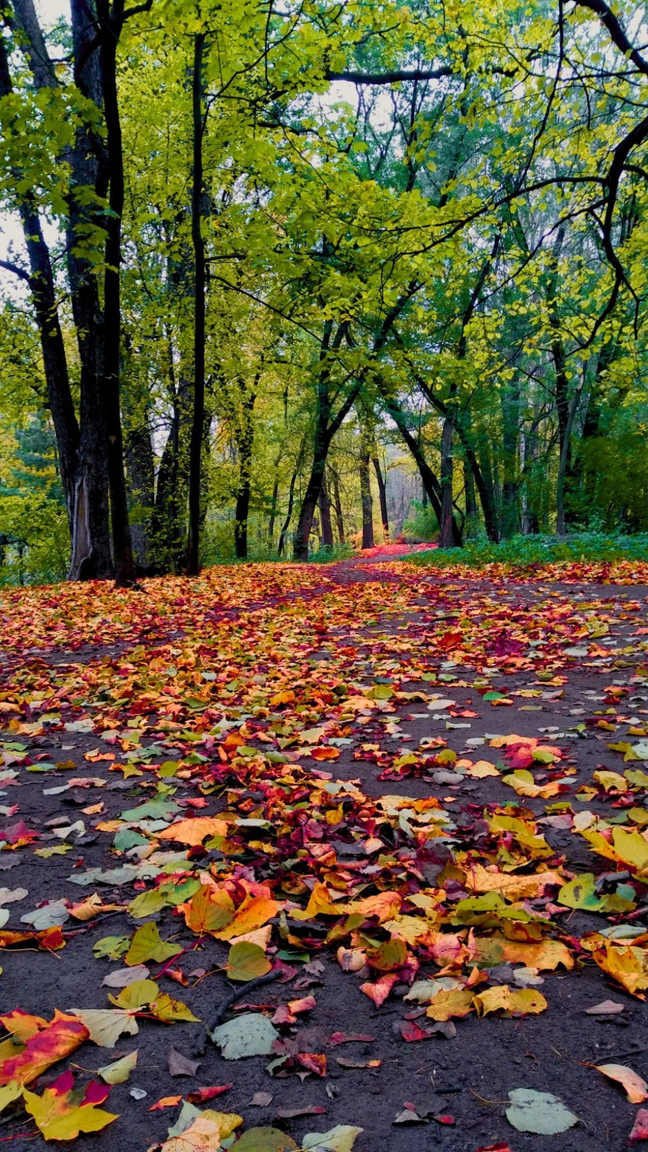 Краски осени🍁 Autumn