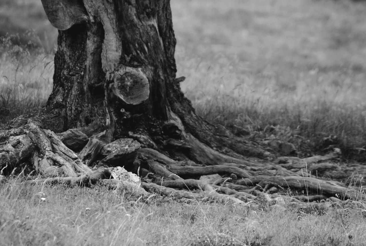 EyeEm Nature Lover Tree Roots Beauty In Nature Nature_collection Nature Photography Nature