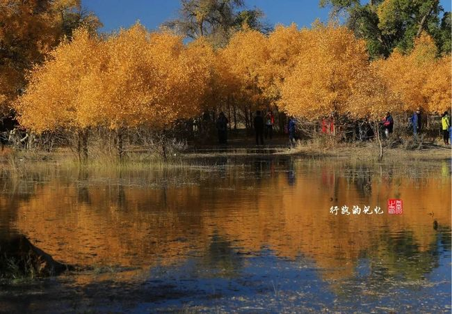 The Great Outdoors With Adobe Populus Diversifolia Forest China