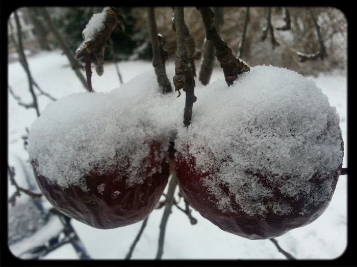 Snow Outdoors apples