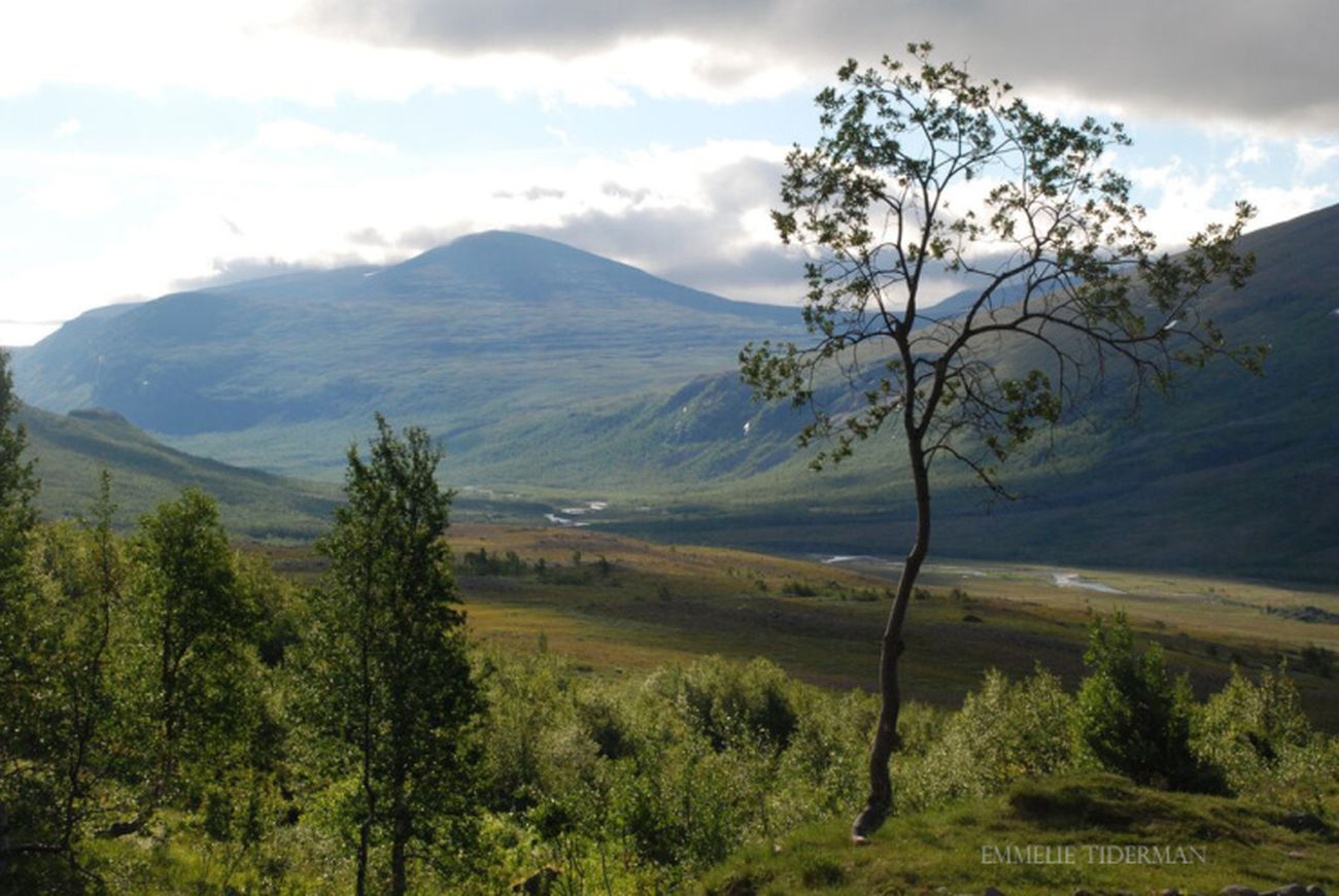 Went hiking up north in sweden! And i got a new photo blogg! Emmeliet.wordpress.com Hiking Mountain Hiking Mountains Sweden Blogg Wordpress
