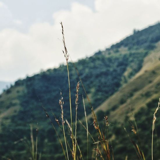 The great outdoors! Nature No People Day Outdoors Mountain Plant Rural Scene Sky Close-up