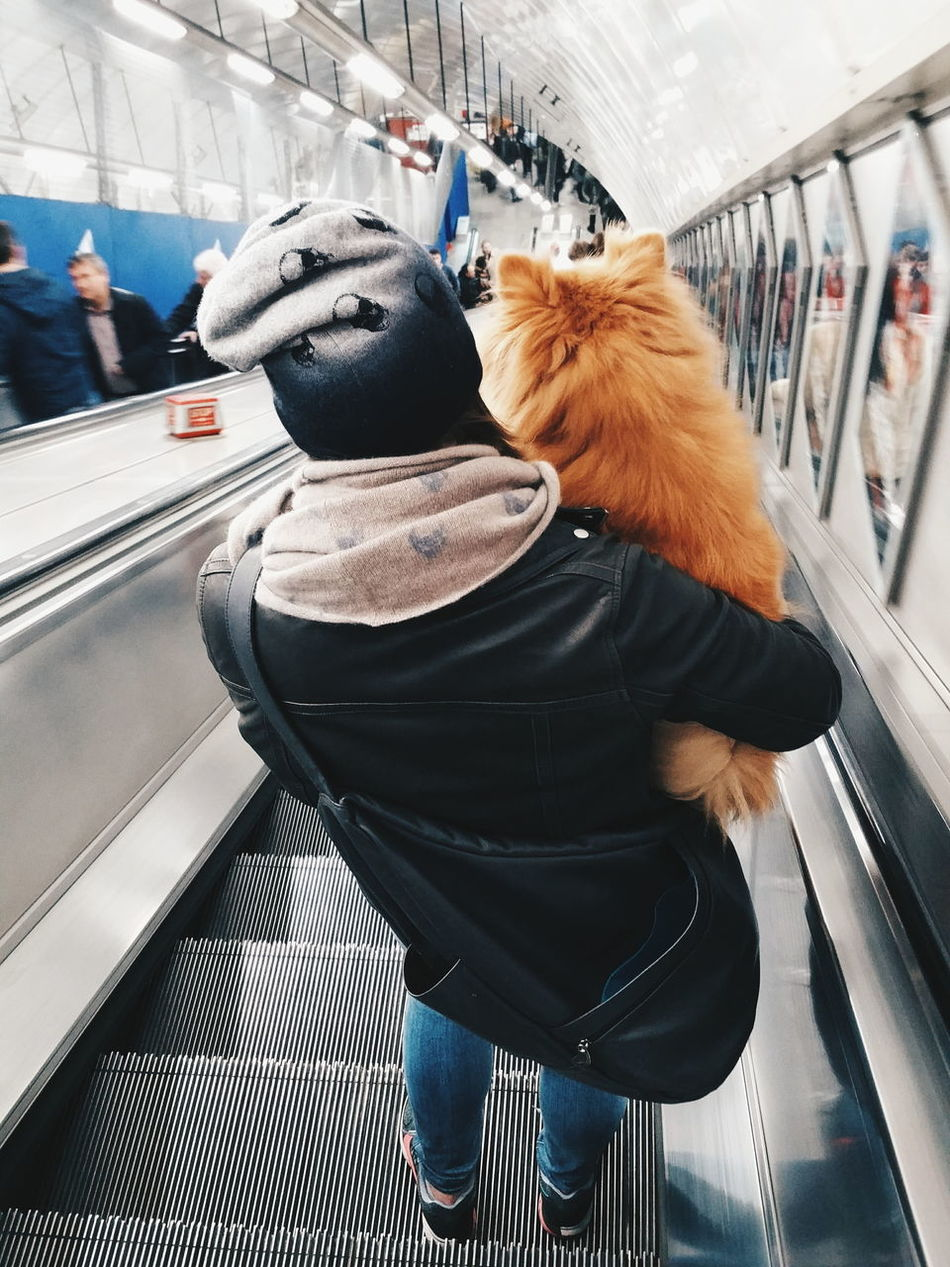 Let's go home London Lifestyle London Pets Dog Travel Public Cute Fluffy City Carry Carrying