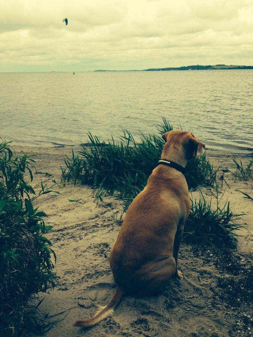 High Angle View Of Dog Sitting On Beach