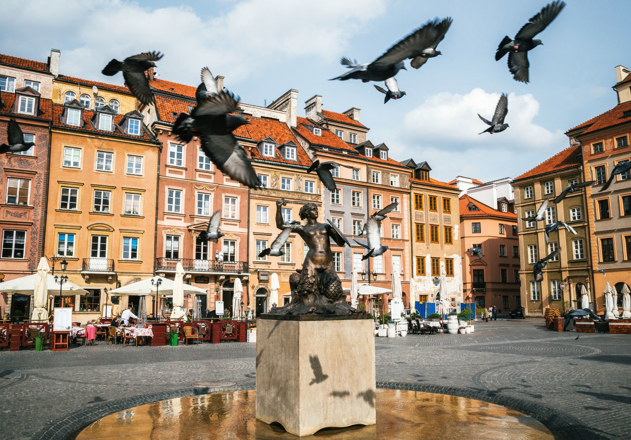 Birds of pigeons are flying through Stare Miasto Old Town Market Square with Mermaid Syrena Statue in the center of Warsaw, Poland. Architecture Bird Birds Building Exterior Built Structure City Cloud - Sky Day Dove Mermaid Outdoors Pigeons Poland Sculpture Sky Statue Warsaw