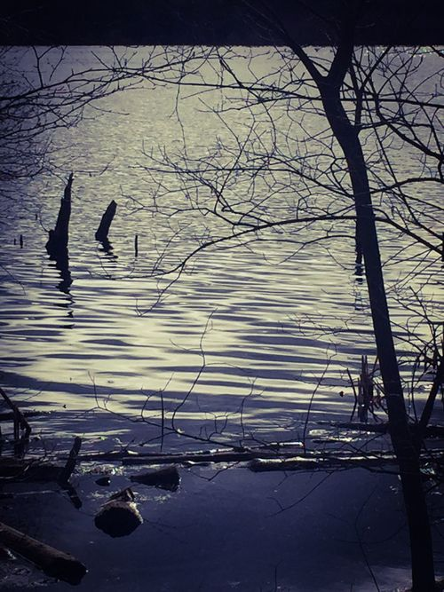 Bird Animals In The Wild Animal Themes Nature Water Lake Silhouette Outdoors Beauty In Nature Sunset Bare Tree Tree Winter Swimming Branch Cold Temperature Day Perching Black Swan