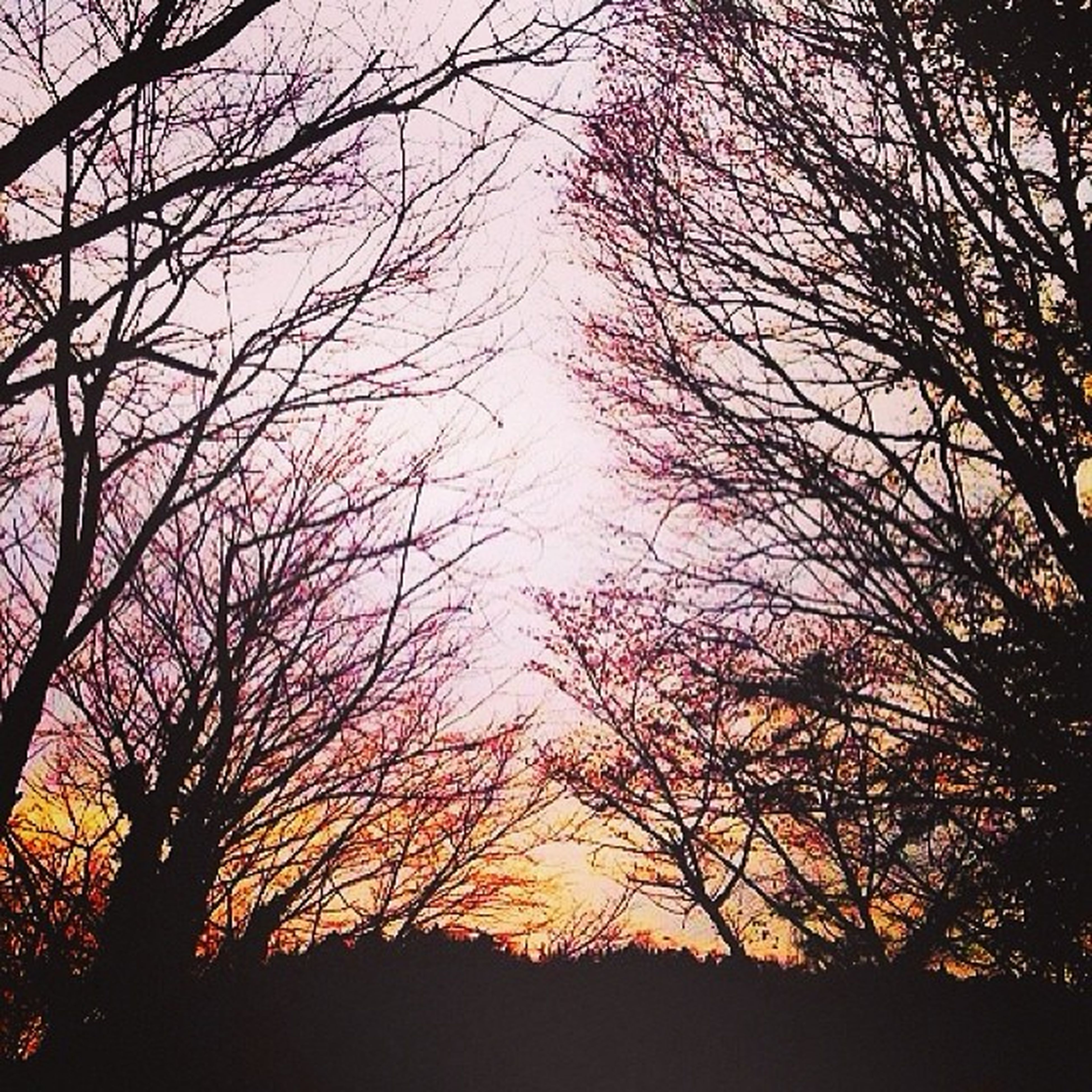 silhouette, sunset, tree, bare tree, tranquility, tranquil scene, branch, scenics, beauty in nature, nature, sky, idyllic, orange color, landscape, outdoors, non-urban scene, growth, no people, sun, non urban scene