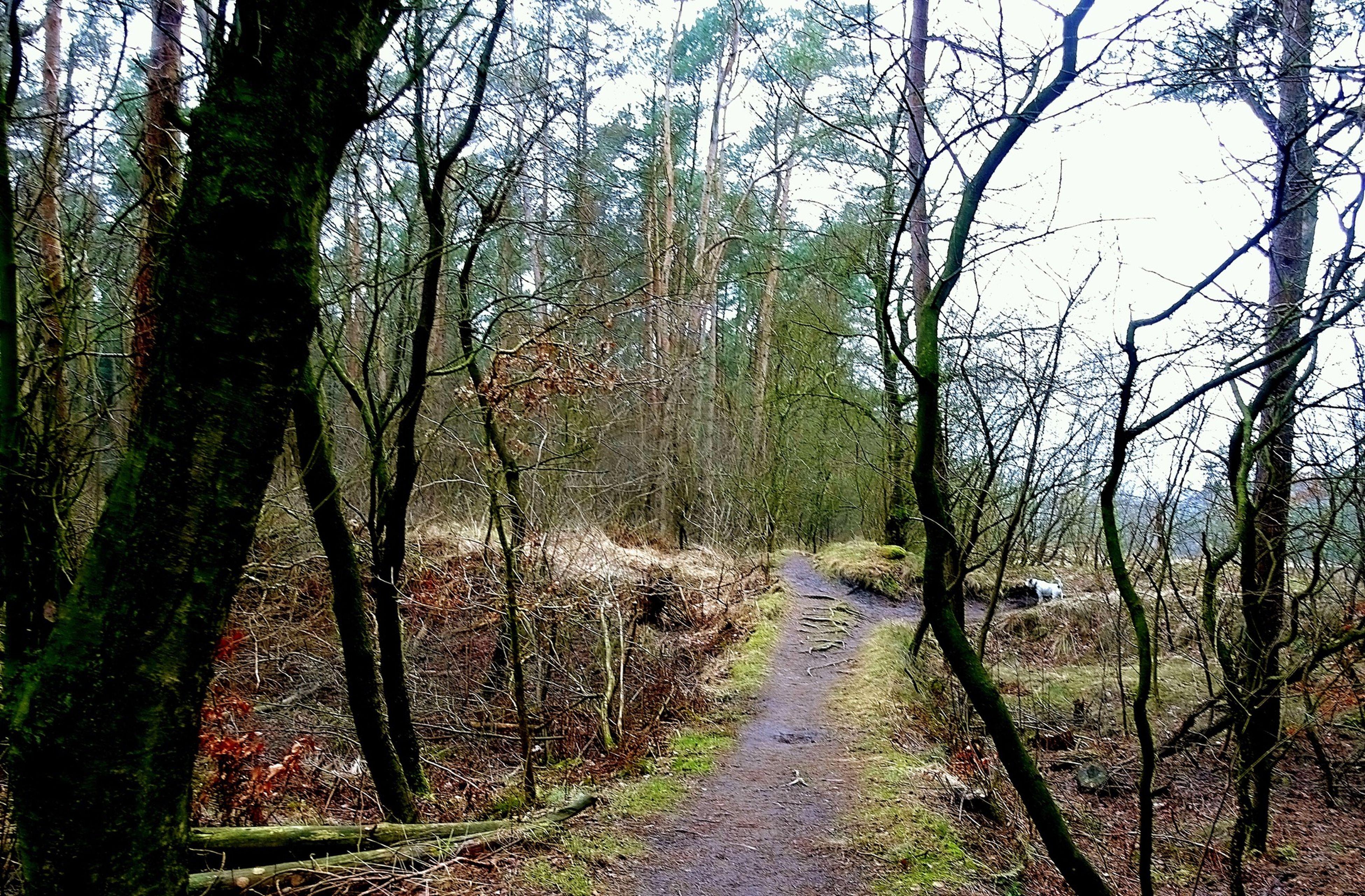 Nature Wald Waldspaziergang