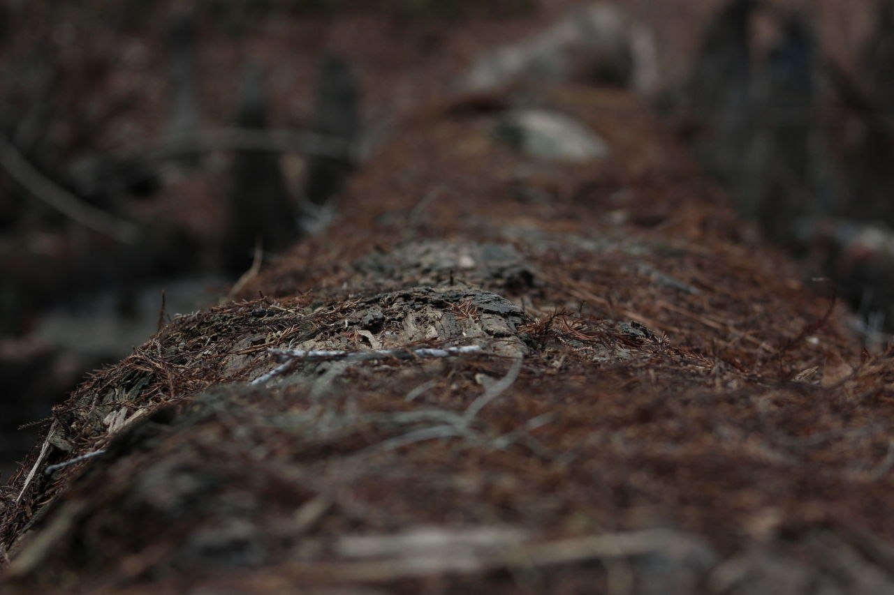 Animal Themes Animals In The Wild Beauty In Nature Close-up Day Fallen Tree Leaf Nature No People One Animal Outdoors Selective Focus Tree Tree